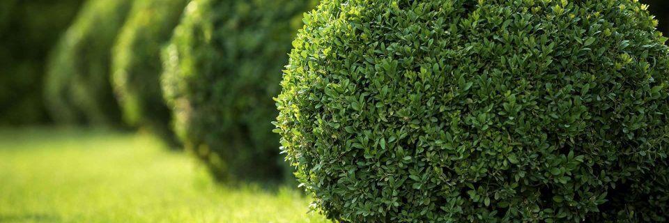 Ландшафтный дизайн, газон, автоматический полив