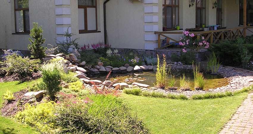 декоративный пруд с растениями возле дома