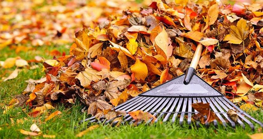 Уборка листьев - газон