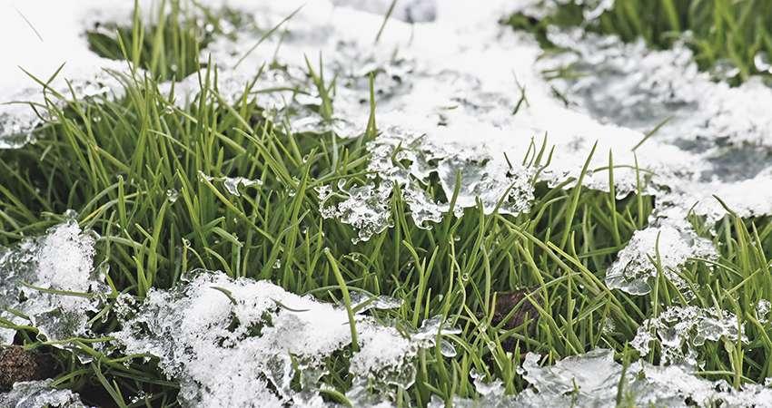 Тающий снег на газоне